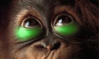 maymuna makyaj